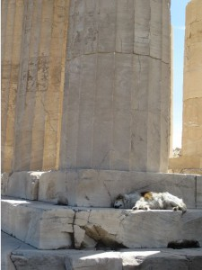 Like cats call the Roman ruins their home, the dogs of Athens enjoy curling up on the steps of ancient temples, like the Parthenon