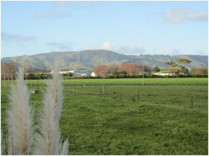 Hills and farms surrounding Massey