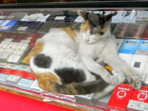 Also, cats everywhere! They are hanging out in many of the little shops.