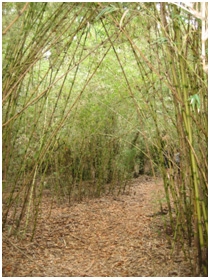 Bamboo-like plants in the forest