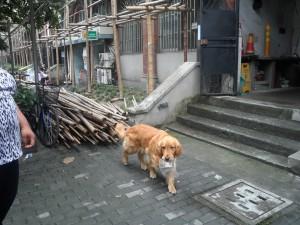 Somebody's dog