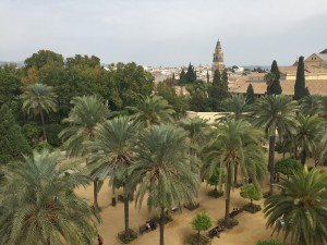 Some really organized palm trees from the view from the top of the castle.
