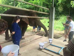 Testing the elephant's sense of smell